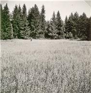 Hällristningsmiljö, Miljöbild, Landskapet